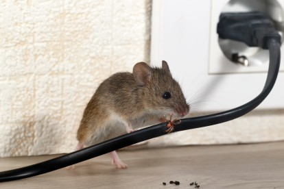 Pest Control in Sydenham, SE26. Call Now! 020 8166 9746