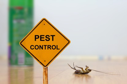 Pest Contol in Sydenham, SE26. Call Now 020 8166 9746