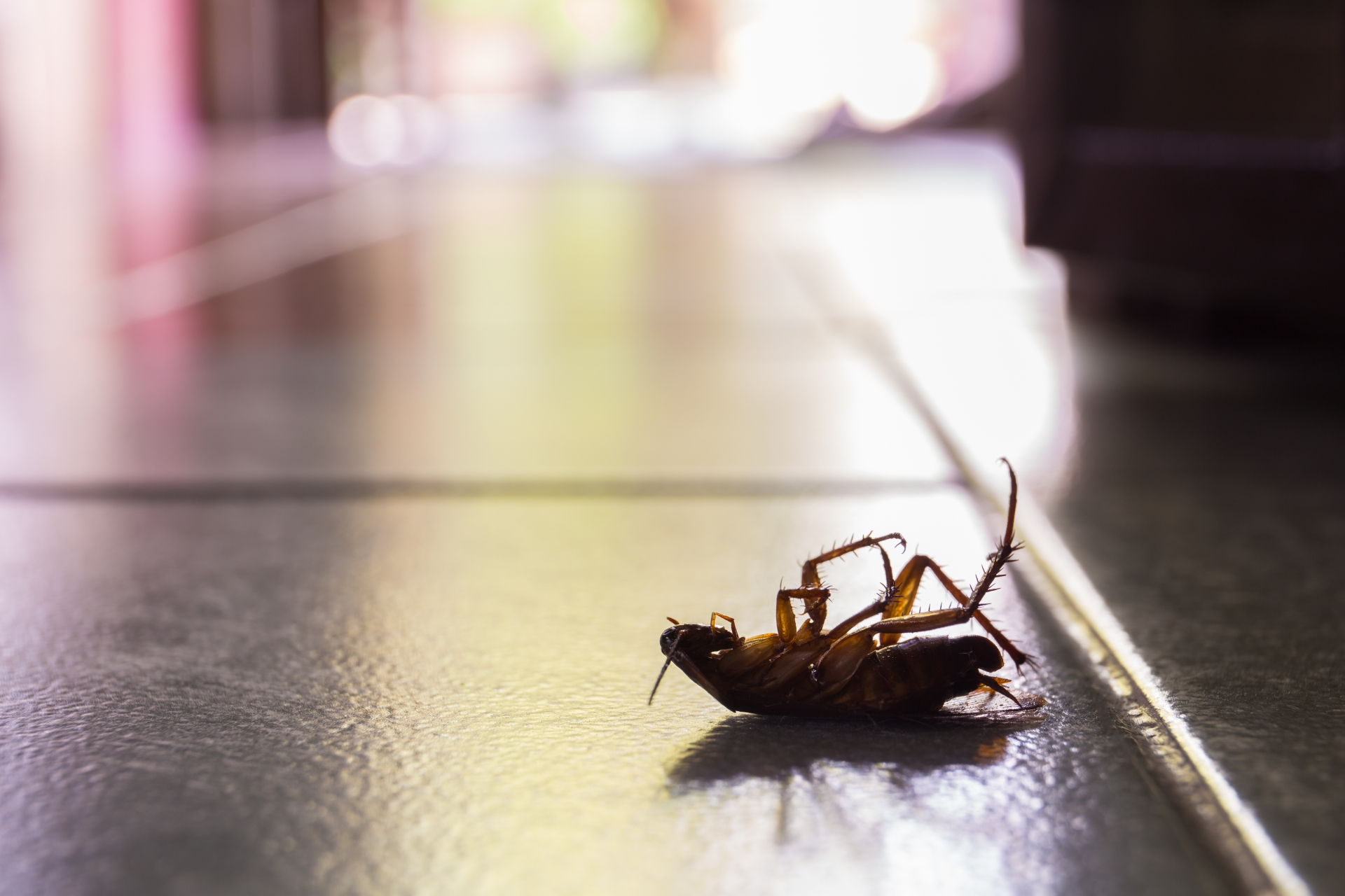 Cockroach Control, Pest Control in Sydenham, SE26. Call Now 020 8166 9746