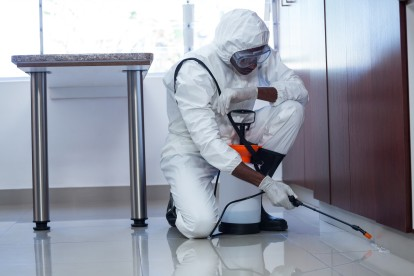 Emergency Pest Control, Pest Control in Sydenham, SE26. Call Now 020 8166 9746